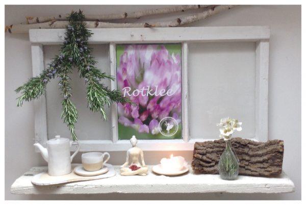 Heilpflanzenfenster