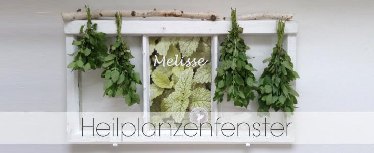 Heilpflanzenfenster_HP